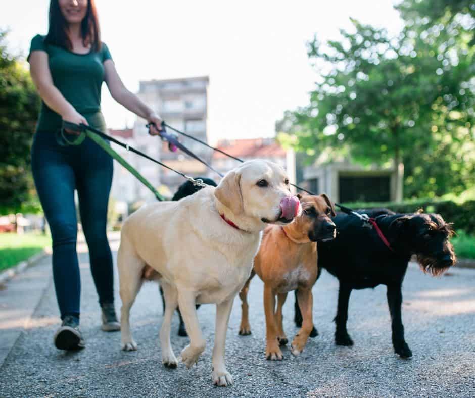 Walk dogs to make money as a teen