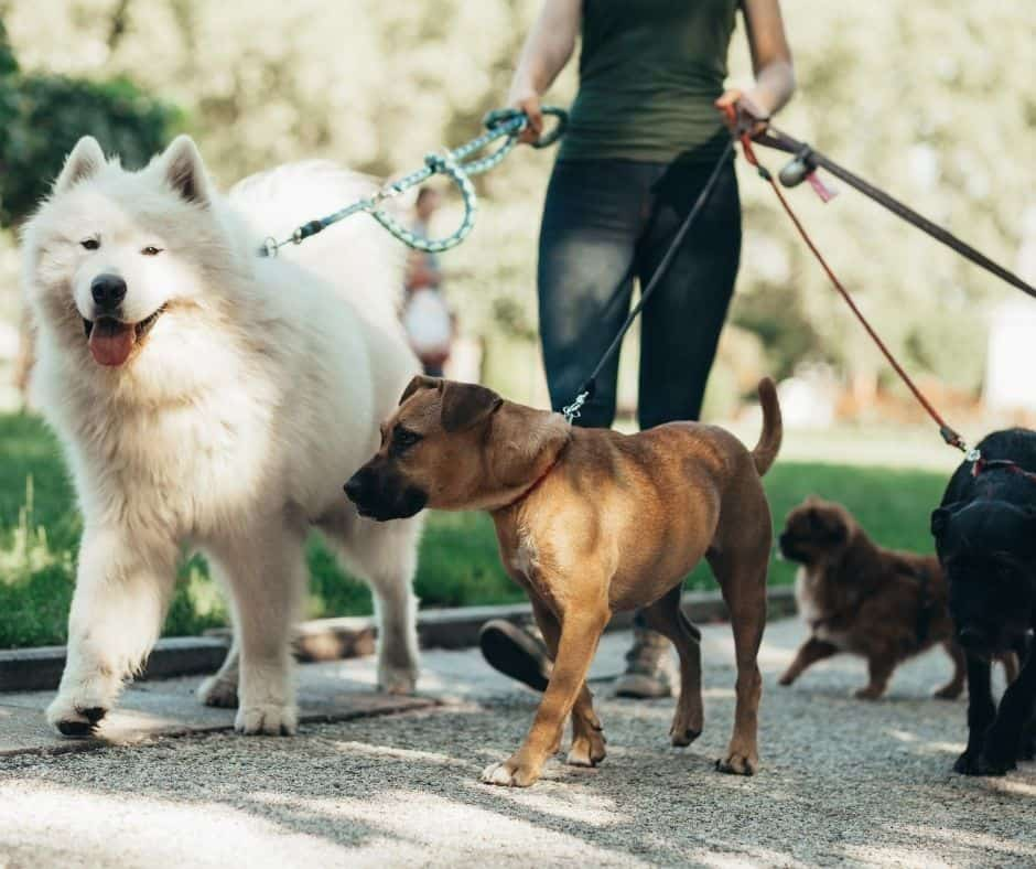 Become a dog walker to make extra money with this easy part time job.
