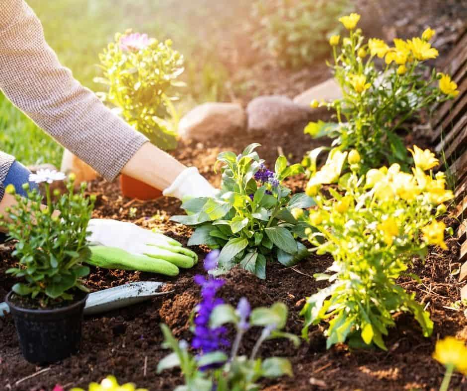 garden and gardener